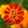 Blume, deren Namen ich nicht kenne