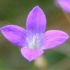 Blume, deren Name ich nicht kenne