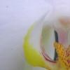 Orchidee im Orchideenhaus