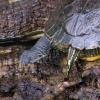 Schildkröte im Schmetterlingshaus