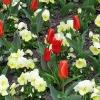 春天的花圃