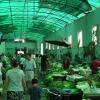 der Gemüsemarkt
