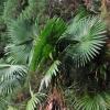 auch an der natürlichen Vegetation ...