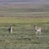 这个早上我们有好的运气:先我们看过两只羚羊。。。