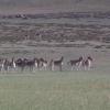 最后我们还有拍一群驴子的机会