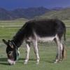 驴子大都数的时候就应该努力工作