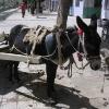 日喀则市市西藏第二大的城市;有不同的办法运输东西:用驴子比较方便