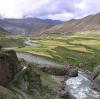 因为在高一点的西藏的地方不可以种很多植物,所以在这里有很多