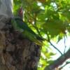 kaum zu erkennen, aber das ist ein Papagei (oder was ähnliches) ;)