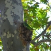 hard to detect, but there is a parrot here